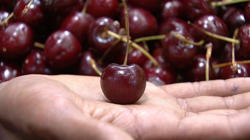 Polémica en china por supuesta presencia de COVID-19 impacta venta de cereza chilena