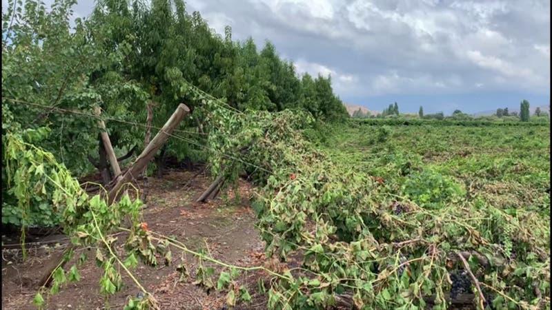 Uvas y tomates entre los productos más afectados por el temporal