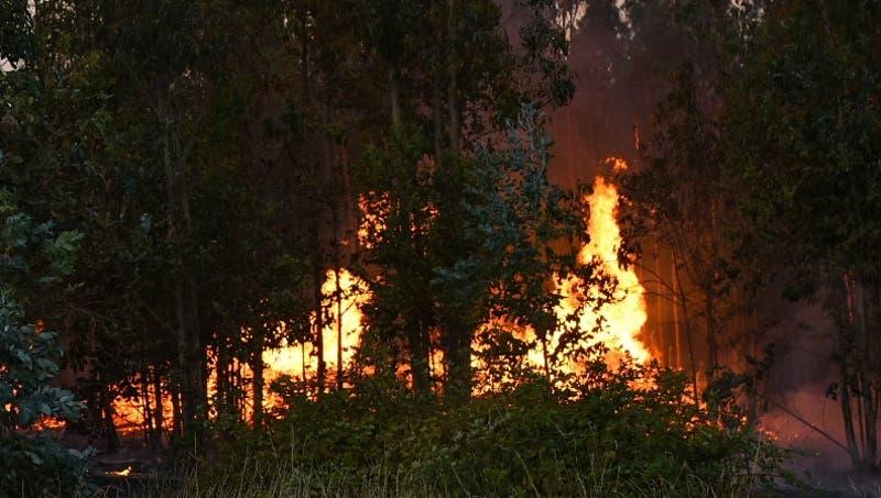 Onemi decreta alerta roja para Lumaco y Galvarino por incendios forestales