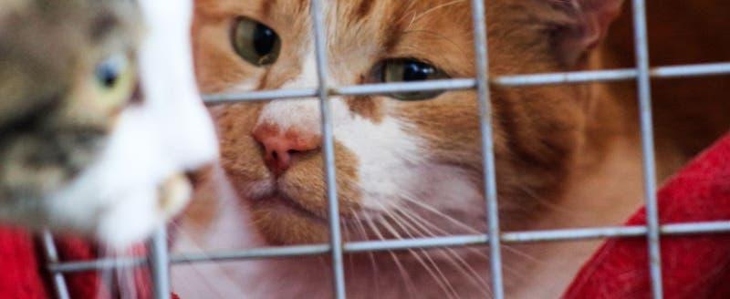 Master Cat retira lotes vinculados a problemas de salud de gatos