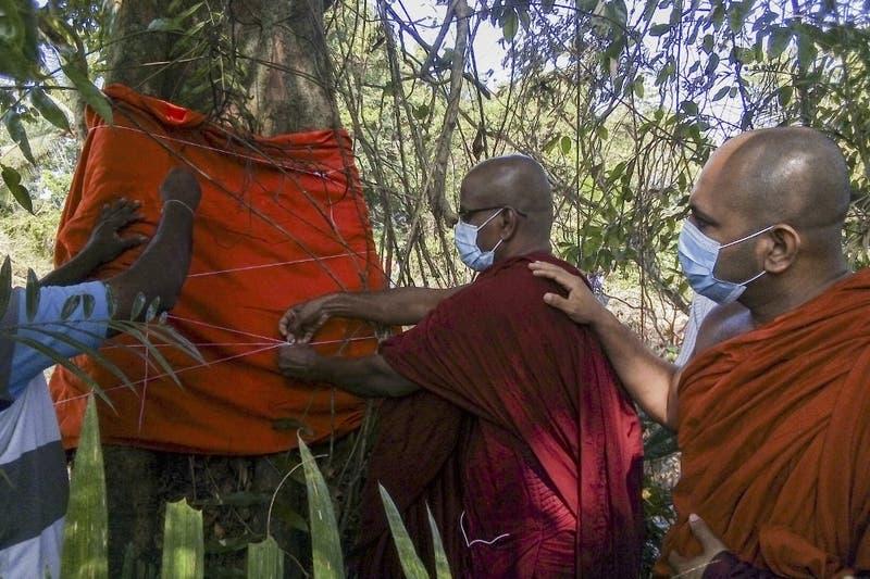 Lo iban a talar para construir una carretera: Sri Lanka salva último árbol de una especie extinta
