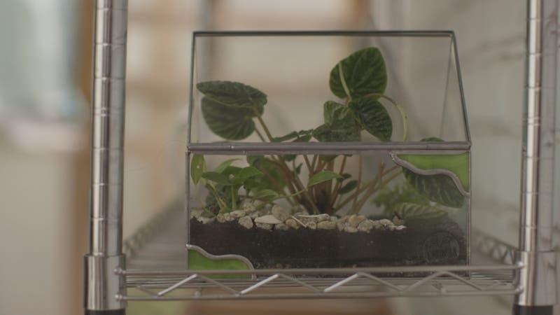 """[VIDEO] #CómoLoHizo: Emprendieron embotellando """"plantas eternas"""""""