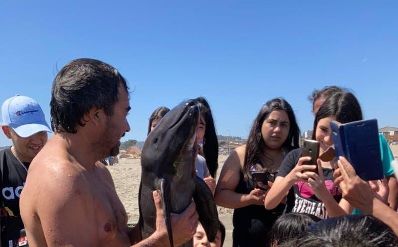 Cría de marsopa muere tras varar en El Tabo: Bañistas se sacaron selfies con ella y no la ayudaron