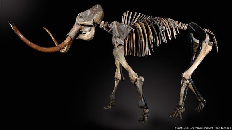 Recuperan el ADN más antiguo del mundo en los restos de mamuts hallados en Siberia