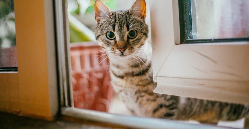 Sernac exigirá compensación para dueños de gatos afectados por lotes de alimentos Master Cat Gatitos