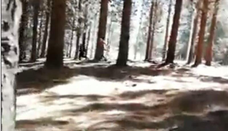 Dos carabineros heridos tras procedimiento policial en Cholchol por robo de madera