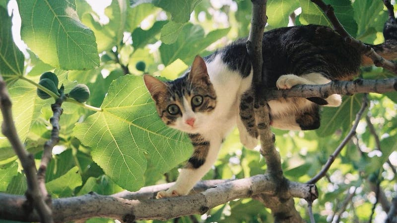 [VIDEO] Gato pasó dos días atrapado en un árbol: Se rescató a sí mismo con una escalera