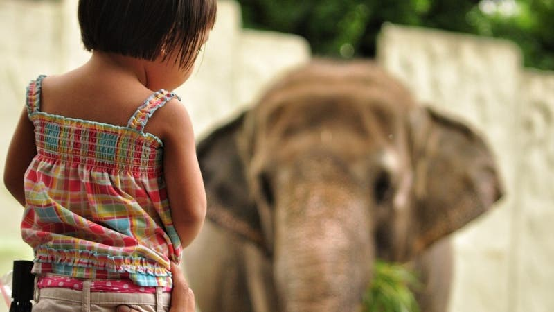 Hombre es arrestado meterse junto a su hija en el hábitat de los elefantes de un zoológico