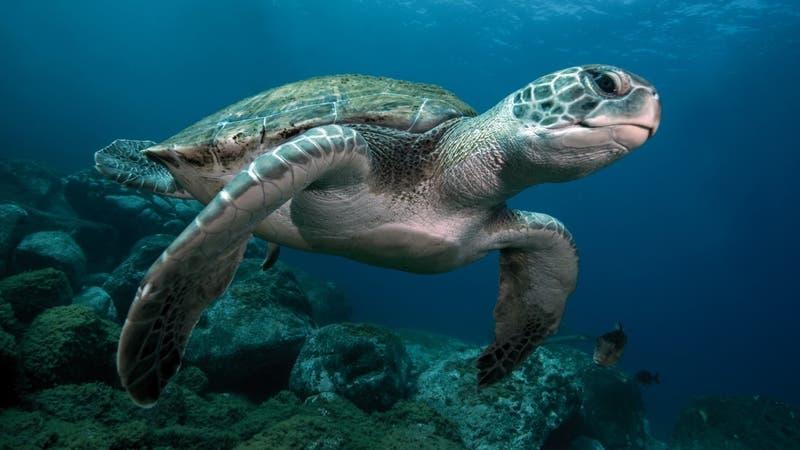 Nueve niños mueren tras comer carne de tortuga marina: Hay otras 37 personas hospitalizadas