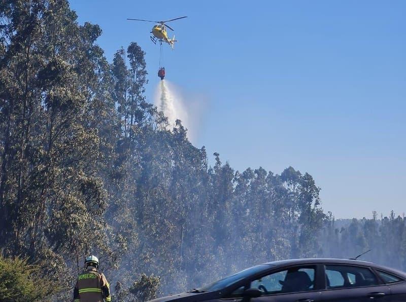 Alerta roja en Valparaíso y Casablanca por incendio forestal cerca de Lago Peñuelas