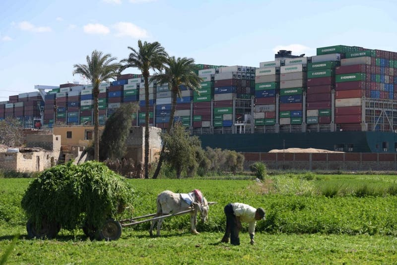 Miles de animales están atrapados en el Canal de Suez