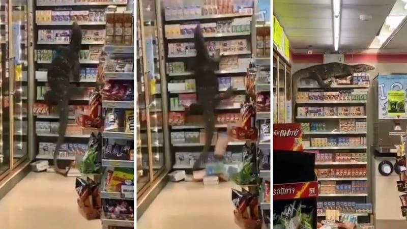 [VIDEO] ¡Del terror! Lagarto gigante ingresó a tienda en Tailandia y asustó a todos sus clientes