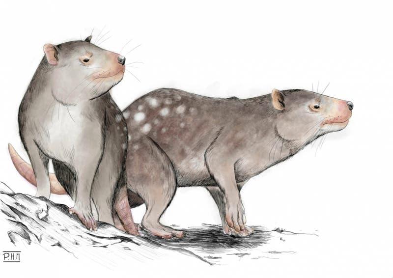 Investigadores de U. de Chile descubren nuevo mamífero de la era de los dinosaurios en la Patagonia