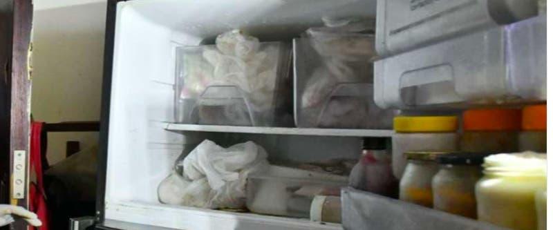 Encuentran 7 gatos muertos en el refrigerador de un departamento en Argentina