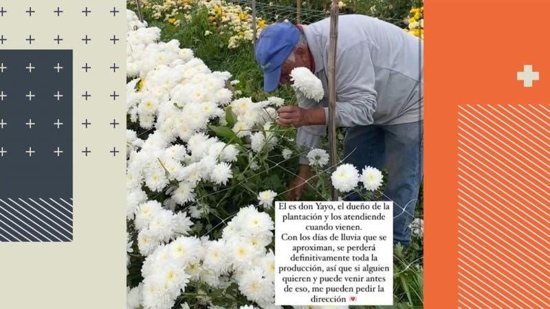"""Jardín """"Don Yayo"""" de Limache remata 30 mil flores para no perder su cosecha"""