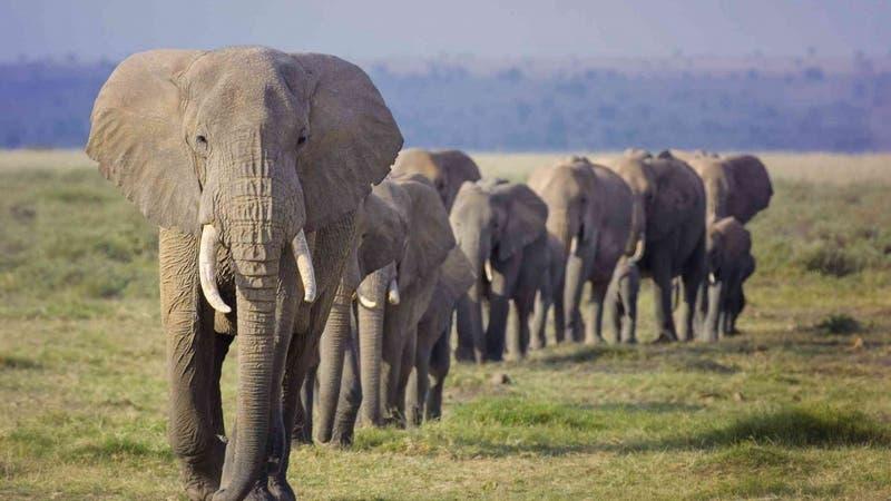 Encuentran al menos 18 elefantes muertos en India: Habrían perdido la vida tras la caída de un rayo
