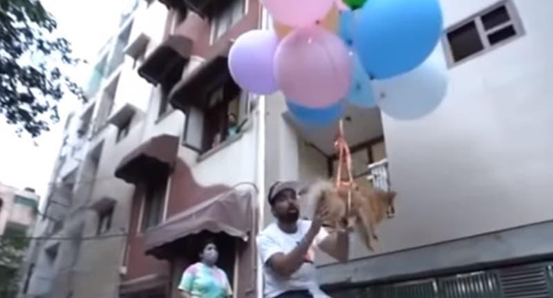 Brutal maltrato animal: YouTuber ató a su perrita a globos de hidrógeno y grabó cómo se elevaba