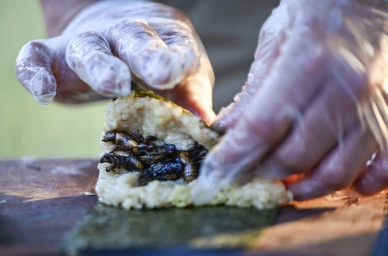 Suchigarra: El crujiente sushi de cigarra considerado un manjar en EEUU