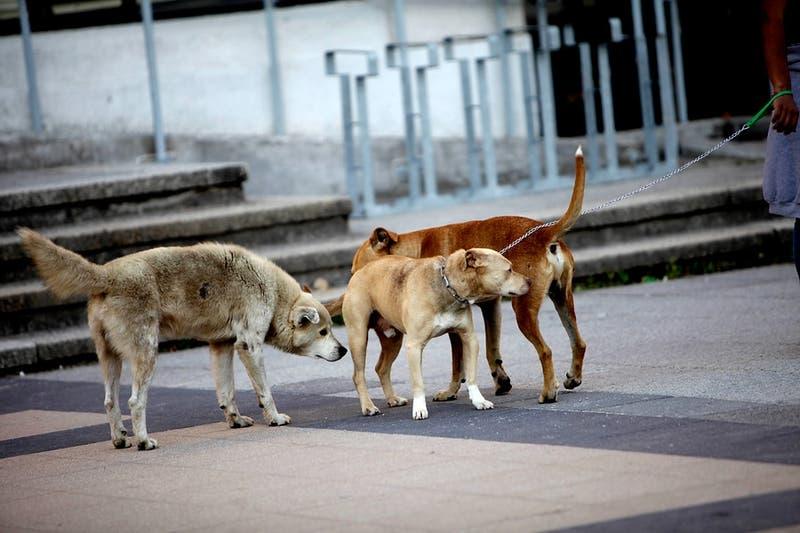 Investigarán a canil municipal de Temuco por la muerte de 5 mil perros durante 9 años