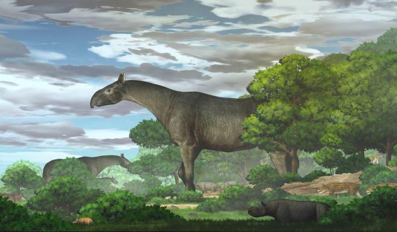 Rinoceronte colosal: Más alto que una jirafa y más pesado que cuatro elefantes