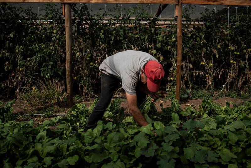 Déficit de personal: buscan casi 3.000 trabajadores para desempeñar labores agrícolas