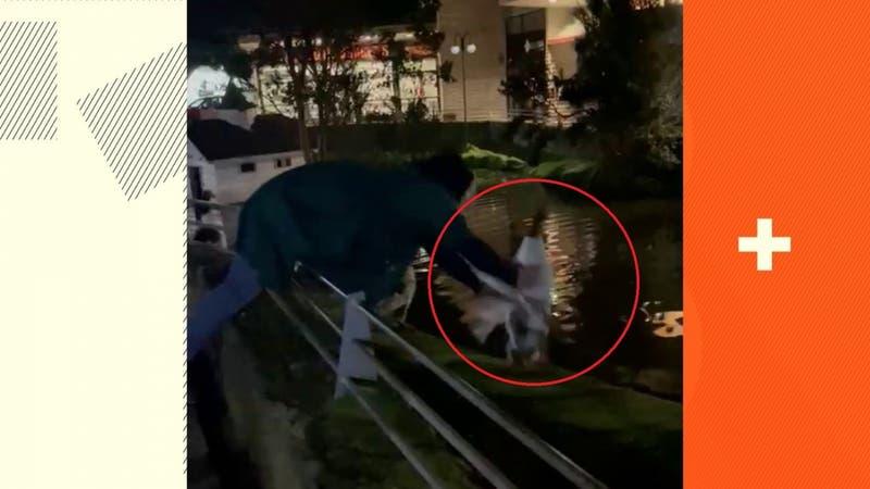 [VIDEO] Desconocidos roban un ganso desde centro comercial en Puerto Varas