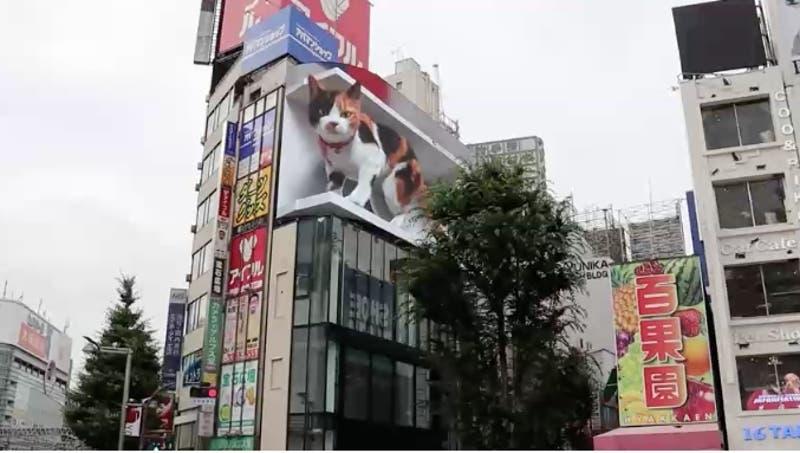 Gato gigante sorprende a los habitantes de Tokio