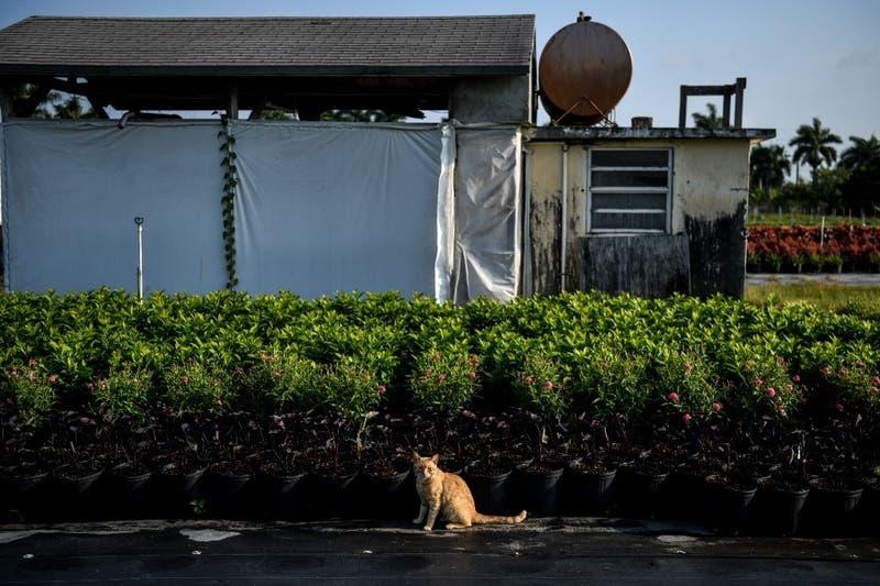 Encuentran con vida a un gato que vivía en el edificio derrumbado en Miami