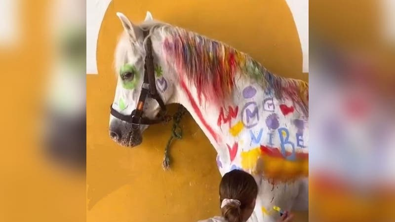"""""""Una aberración"""": Repudio por niños que pintan caballo con brochas en """"actividad infantil"""""""