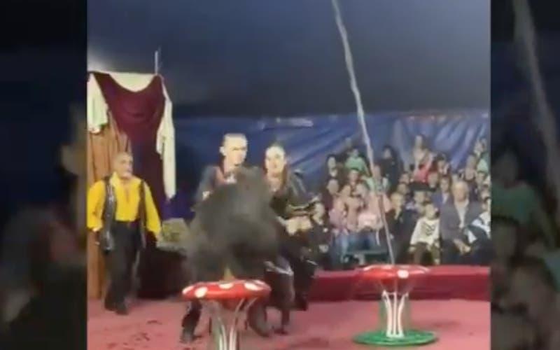[VIDEO] Oso ataca a su entrenadora en plena presentación de circo
