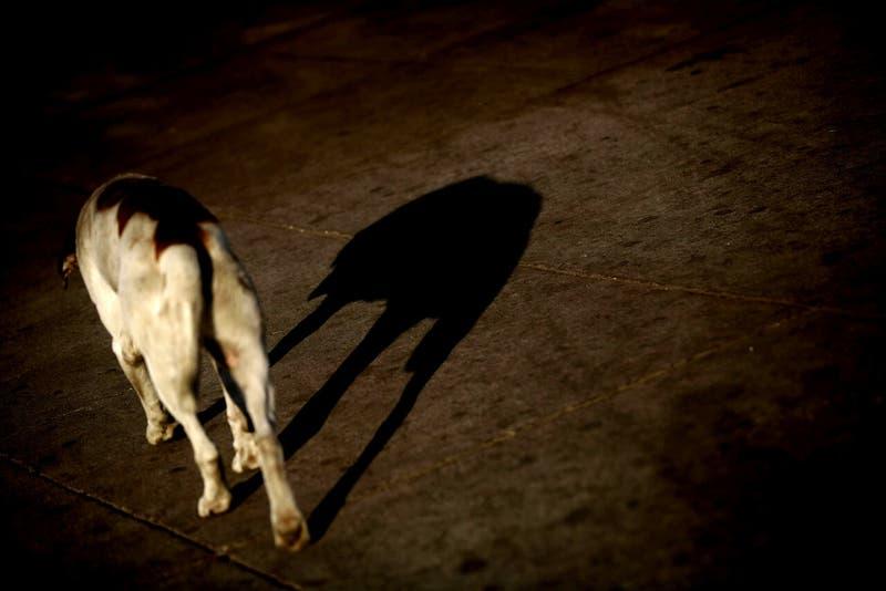 Bomberos realiza operativo en Lo Prado por caso de perro que habría ingerido cianuro