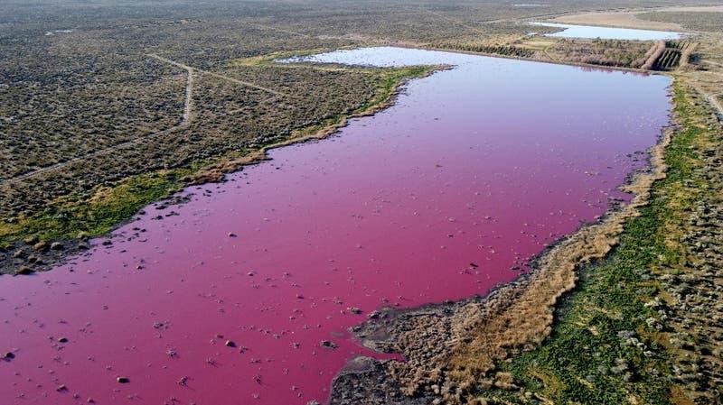 """Río en argentina se tiñe de inusual """"color chicle"""" por la contaminación"""