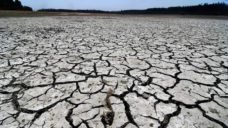 Aceleramiento del calentamiento global: ¿Qué implica lo alertado por el informe de la ONU?