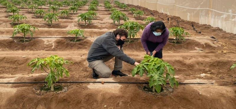 Lanzan programa tecnológico para potenciar la agricultura en el desierto