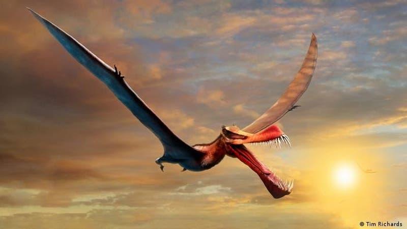 """Australia: hallan el fósil de un dinosaurio gigante al que apodaron """"dragón temible"""""""