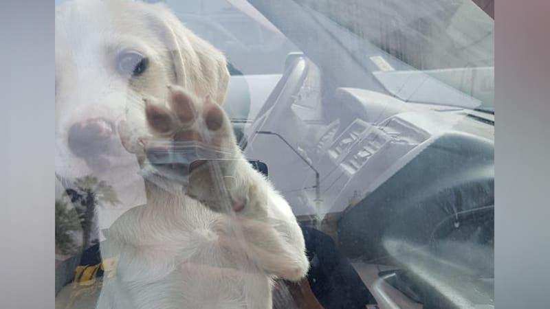 Cachorro es rescatado en Arica: Llevaba horas encerrado en un vehículo