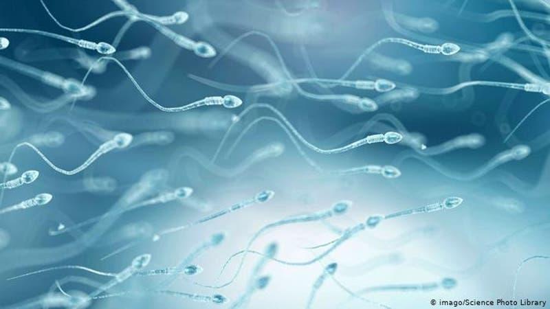 Desarrollan anticuerpos anticonceptivos capaces de inmovilizar a los espermatozoides