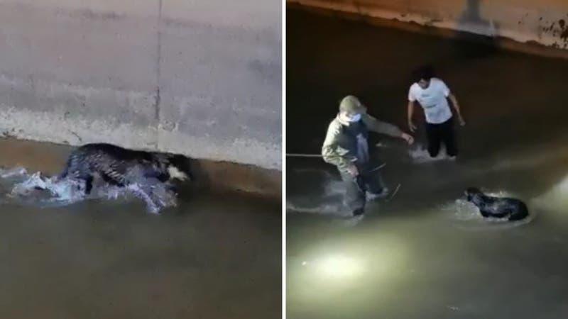 Carabineros rescató a perro que estuvo atrapado dos horas en el Canal San Carlos