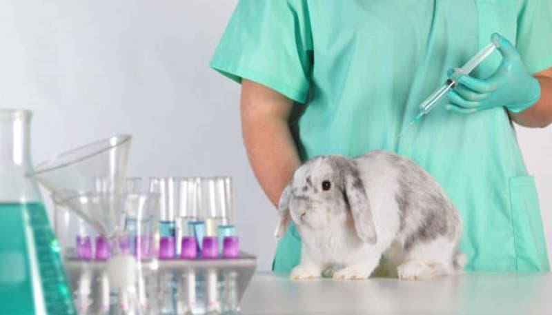 Comisión de Salud de la Cámra de Diputados aprobó proyecto que prohíbe testeo animal en cosméticos
