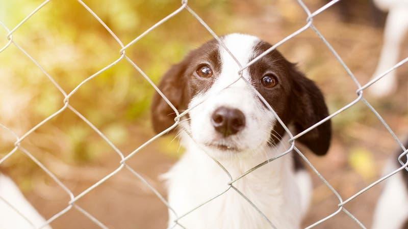 Polémica por asesinato de perros de un refugio para evitar propagación del COVID-19 en Australia