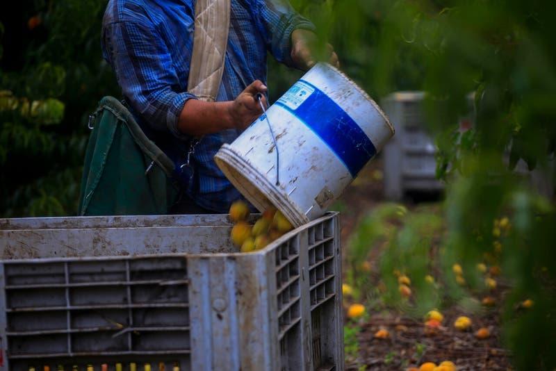 Minagri decreta emergencia agrícola en las regiones de Coquimbo, Valparaíso, O'Higgins y Maule