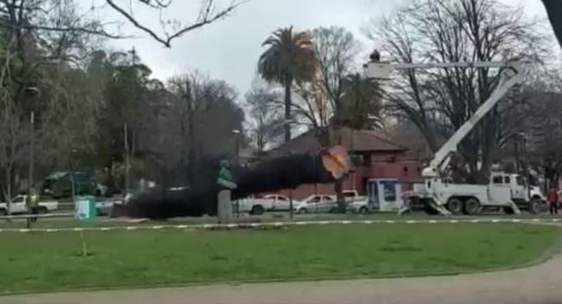 Insólito: Talaban un árbol en Concepción y al caer destruyó una estatua de Simón Bolívar