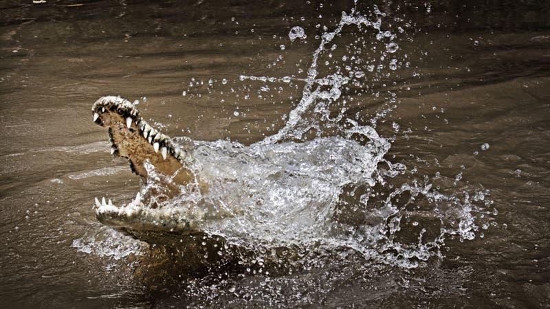 Adulto mayor desaparece tras ataque de caimán en inundaciones provocadas por huracán Ida en EE.UU