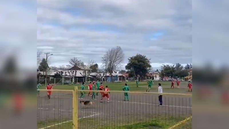 """""""El 9 que estamos buscando"""": Golazo de un perro en fútbol amateur chileno da la vuelta al mundo"""