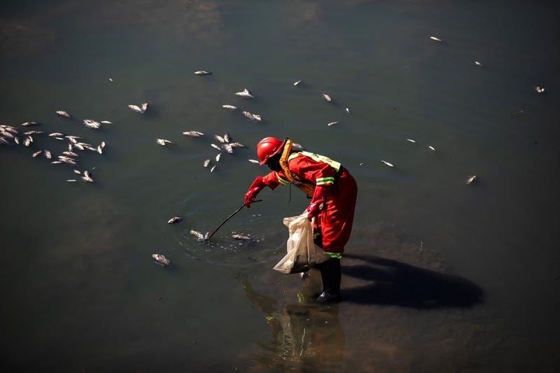 Estamos consumiendo pescado contaminado por los residuos electrónicos que enviamos a África
