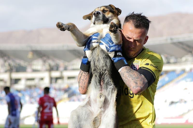 Perrito se roba las miradas en partido entre Antofagasta y Curicó: Fue sacado en brazos