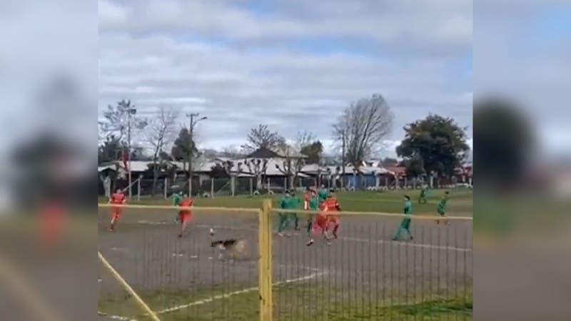 """""""Firulais"""", el perro goleador que se hizo viral en Chillán, es fichado por Ñublense"""