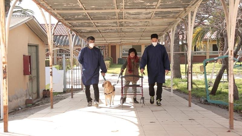 Fundación Tregua: Perritos superhéroes sanan en hogares y hospitales