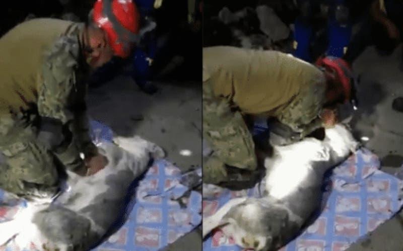 [VIDEO] Bombero intenta reanimar a un perro atrapado en derrumbe en México
