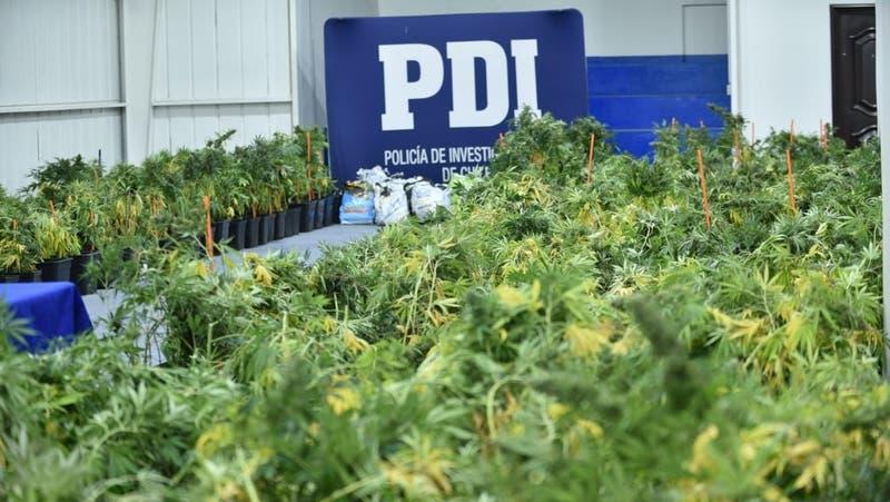 """Desbaratan """"mafia china"""" que operaba en Chile y se dedicaba al narcotráfico"""